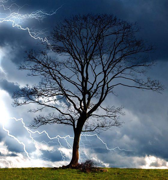 Arbre et orage