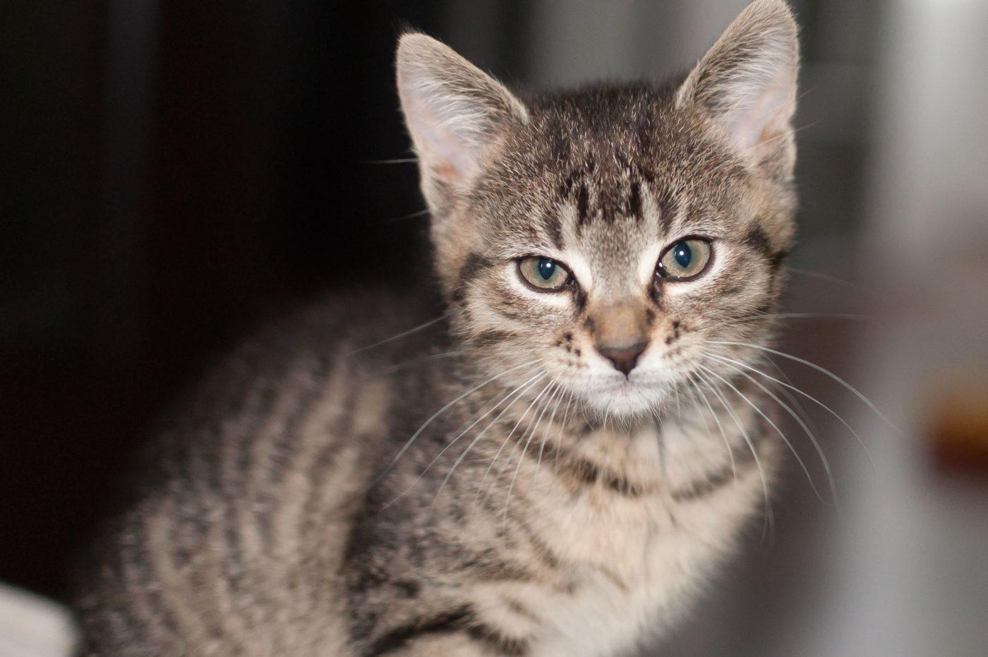 Cette chatière va empêcher votre chat de ramener ses proies