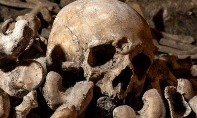 Le florissant business des squelettes sur Instagram