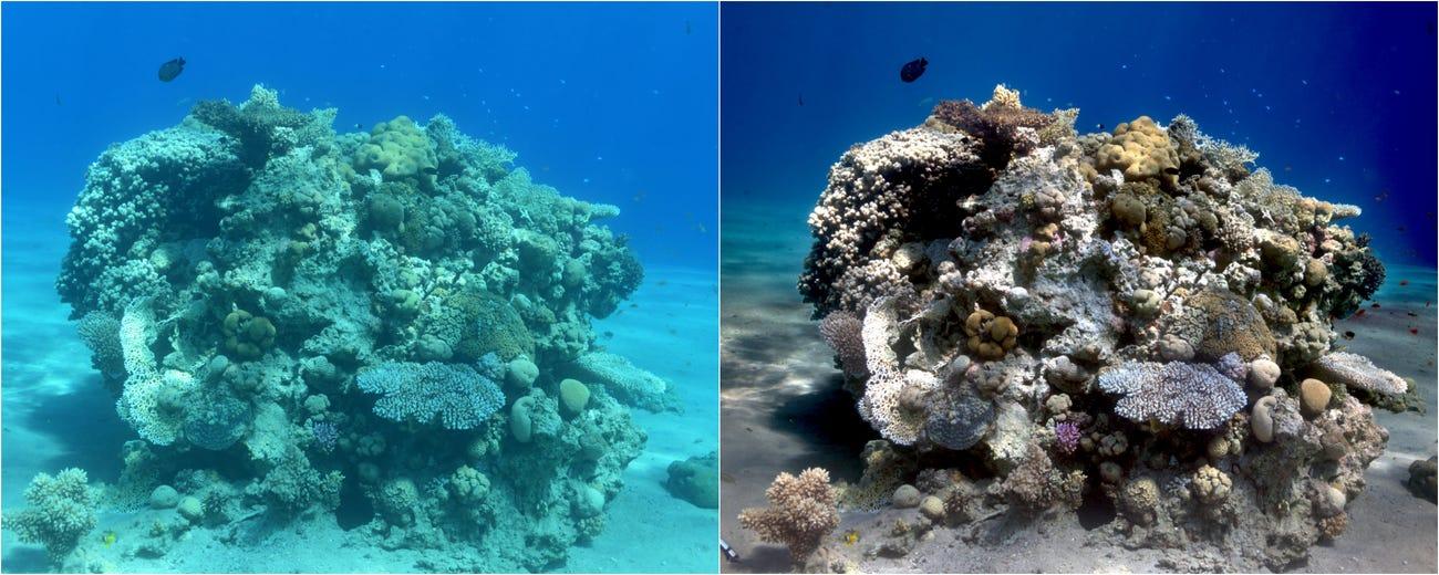 algorithme couleurs ocean