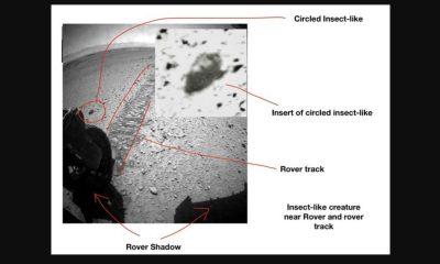 Mars insecte photo