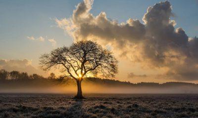 Un arbre, écologie, paysage