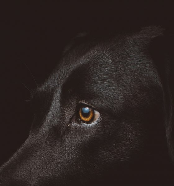 animal perception