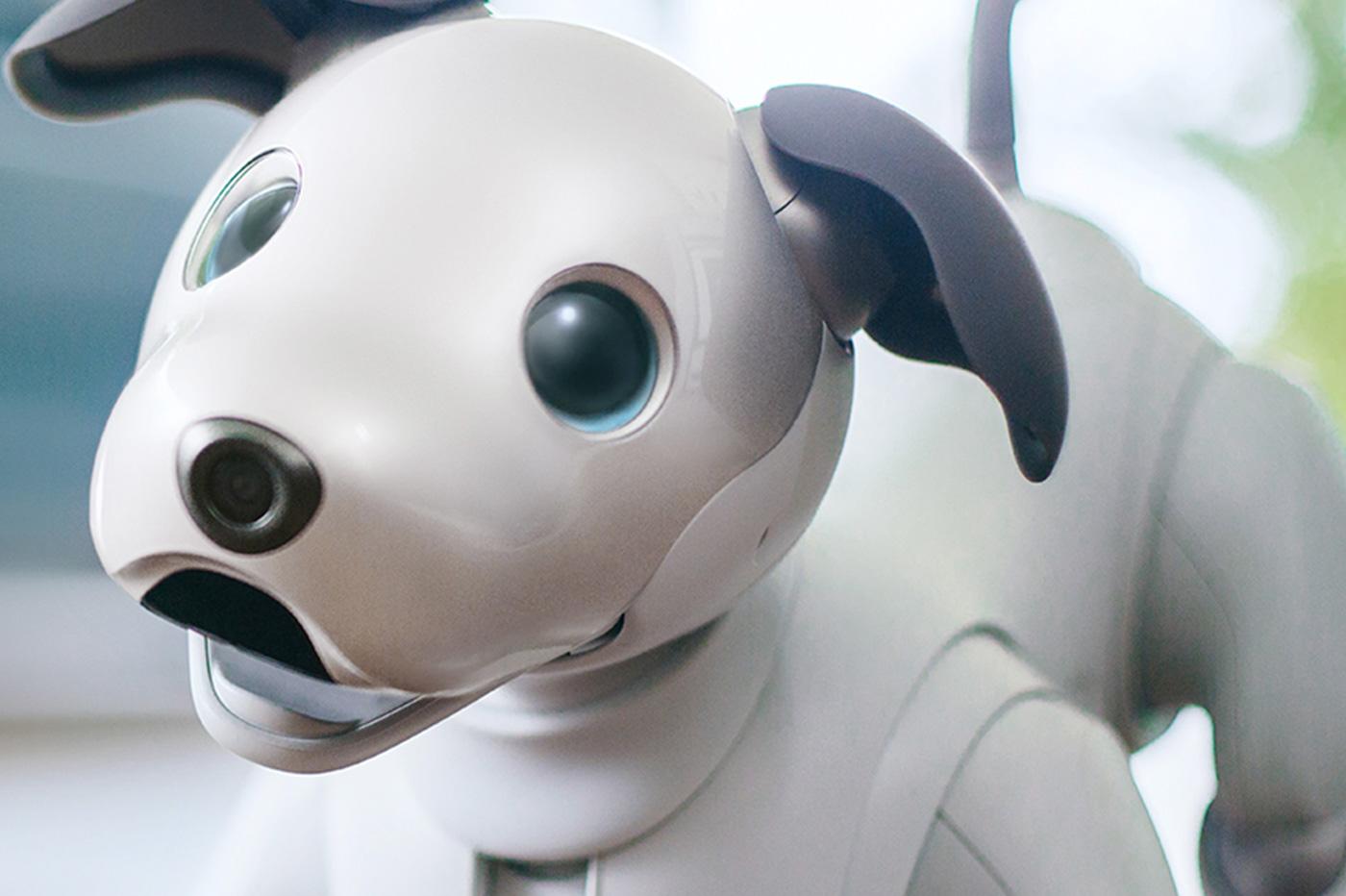 Aibo chien robot