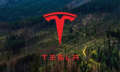 Tesla forêt