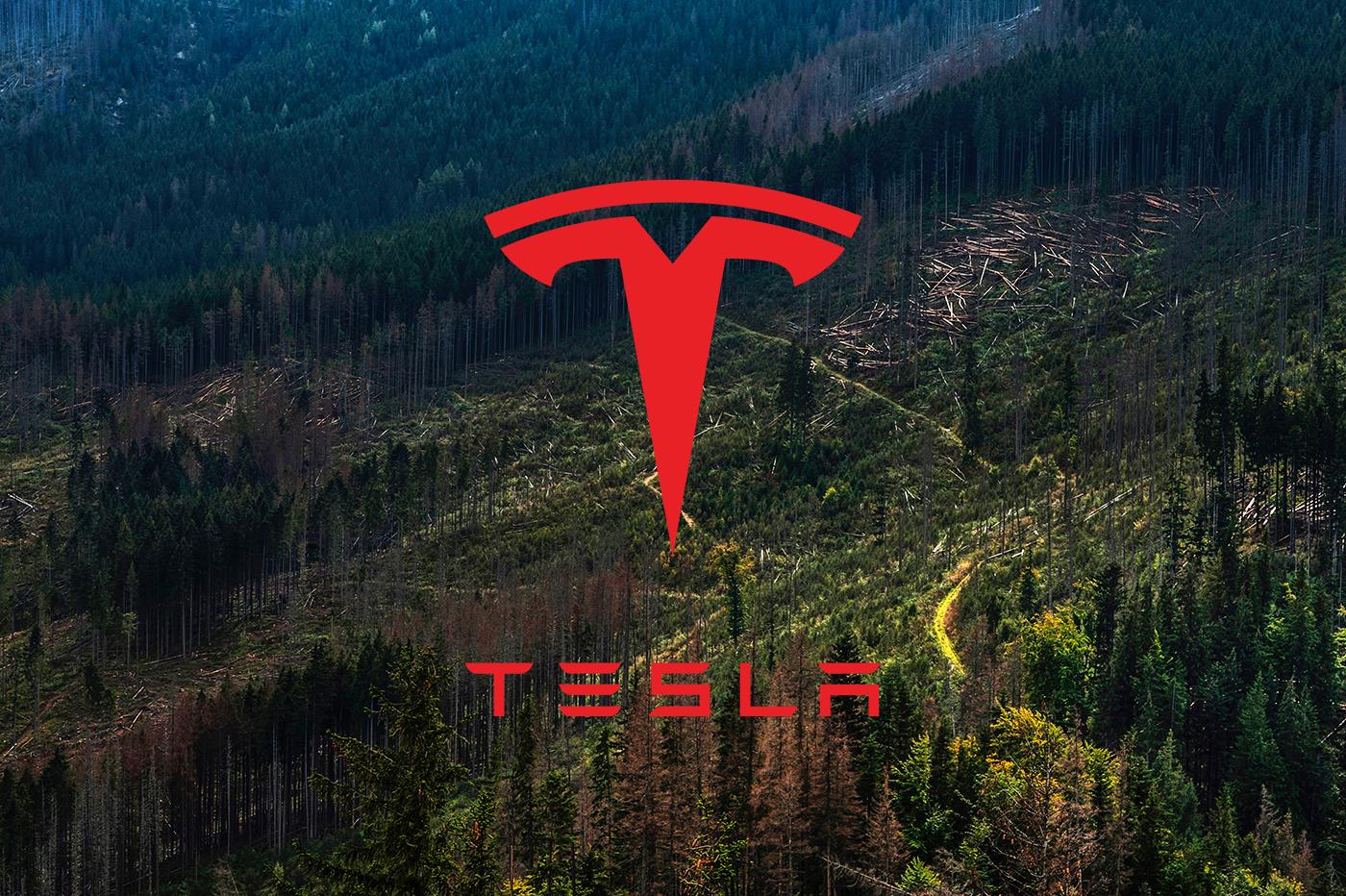 Tesla obtient l'approbation de raser la forêt berlinoise pour y implanter sa Gigafactory