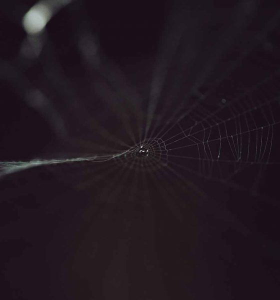 Dark web Zoom