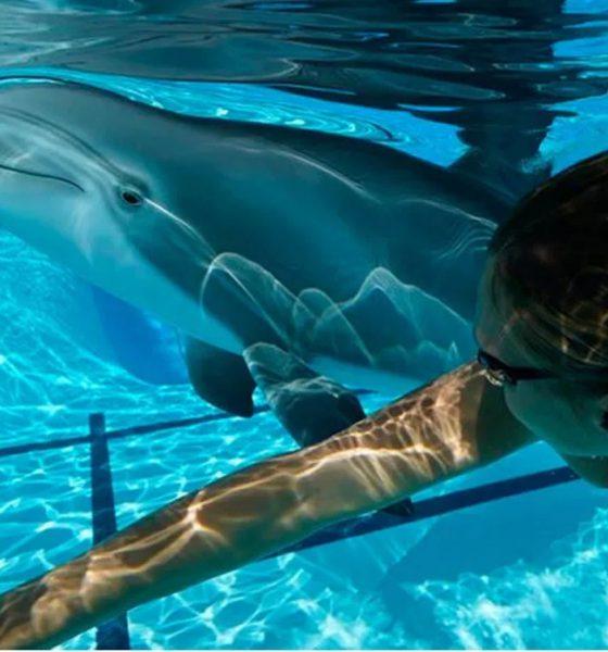 Robots-dauphins