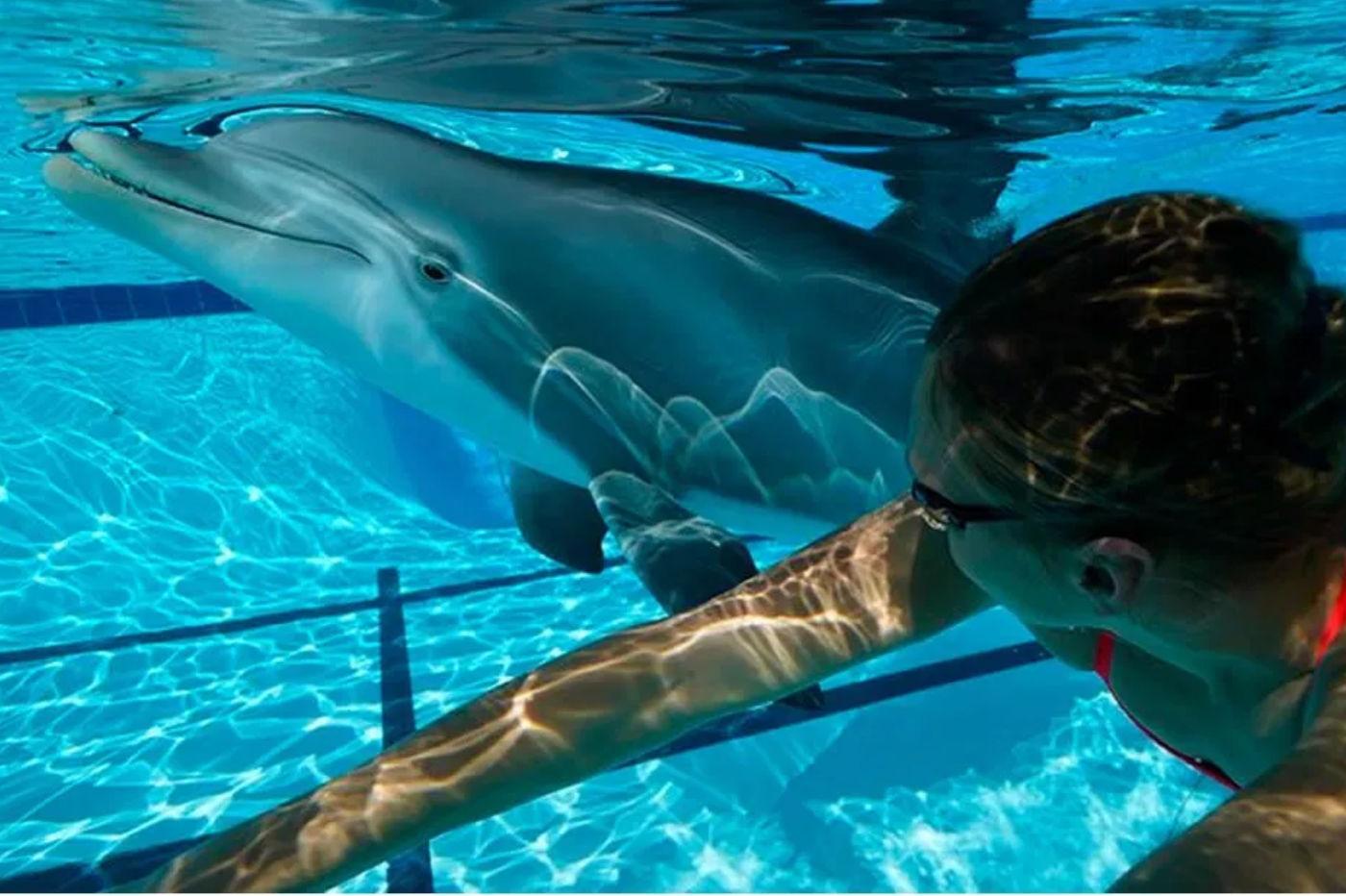Des robots dauphins : la solution du futur pour les parcs aquatiques ?