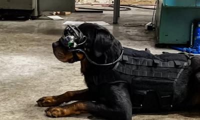réalité augmentée chien
